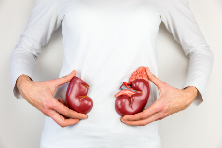 Helpful Tips on Keeping Your Kidneys Healthy